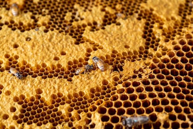 Honingraat met bijentextuurachtergrond