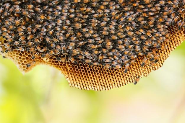 Honingraat op boomaard en zwerm honingbij op kam