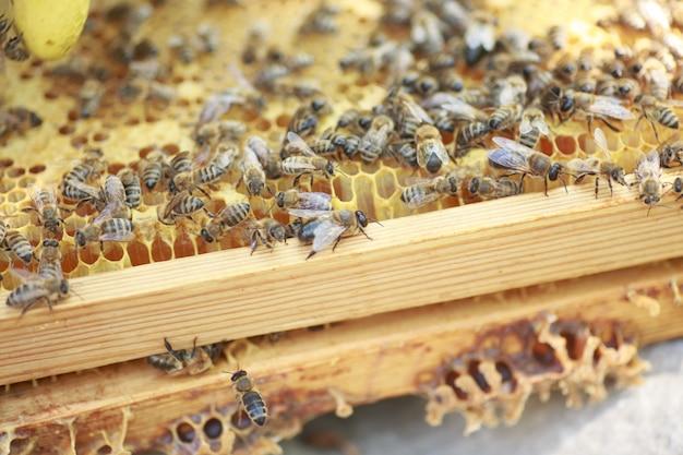 Honingraatframe opgezet door bijen, met gebrek aan ruimte voor honing