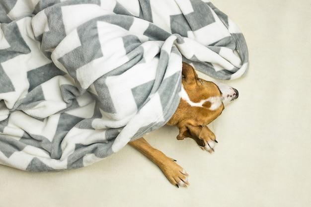 Hoofd en poten van luie hond in schone witte deken