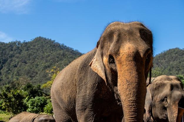 Hoofd van de olifantenfamilie van dieren Premium Foto