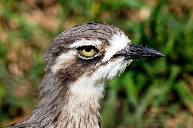 Hoofd van de vogel