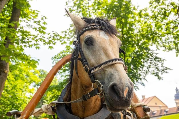 Hoofd van een bruin paard met een harnas in een stadspark