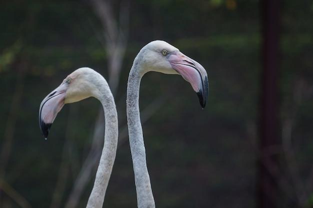 Hoofd van flamingo mooi portret op groene achtergrond