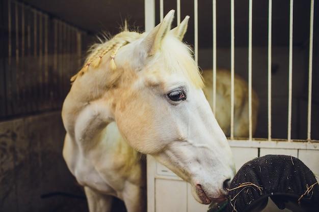 Hoofd van het paard steekt een stabiele deur uit