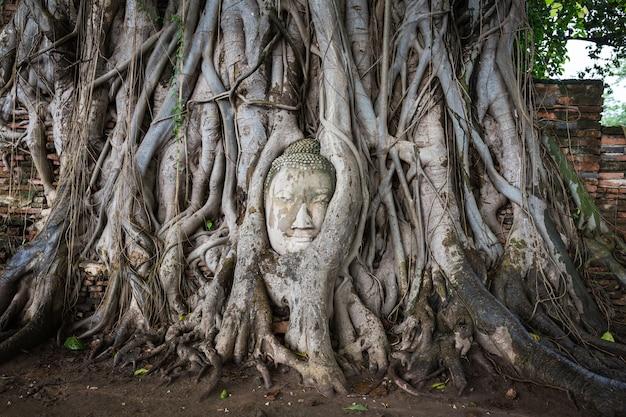 Hoofd van het standbeeld van boedha in de boomwortels in wat mahathat, ayutthaya, thailand.