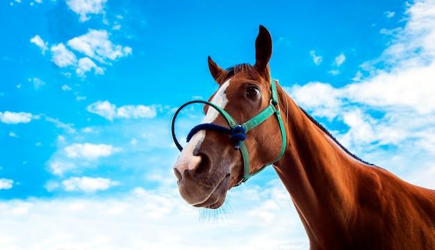 Hoofd van paard met touw in race sport spel