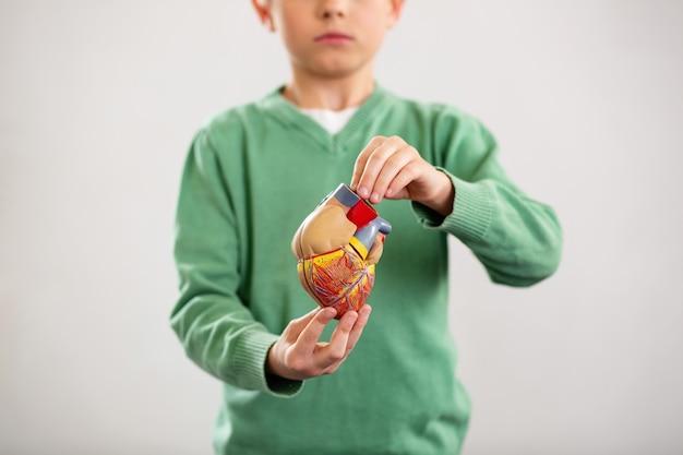 Hoofdorgel. selectieve aandacht van een menselijk hart dat in handen is van een aardige slimme schooljongen