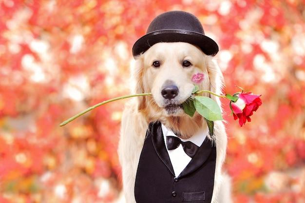 Hoofdportret van een golden retriever op valentijnsdag
