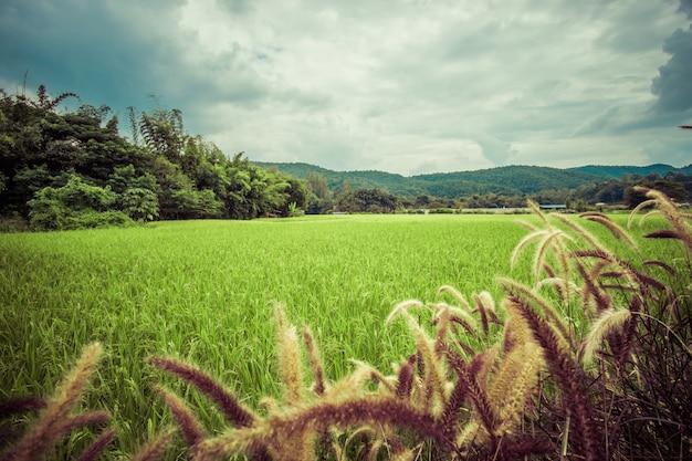 Hoog gras met groen landschap en vintage effect in het midden van een bos