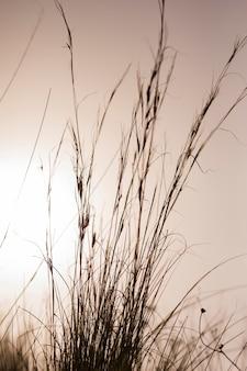 Hoog gras tegen dramatische hemel