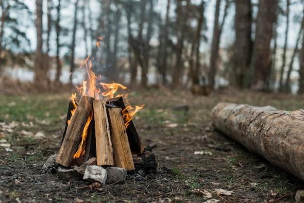 Hoog hoekvuur in bos