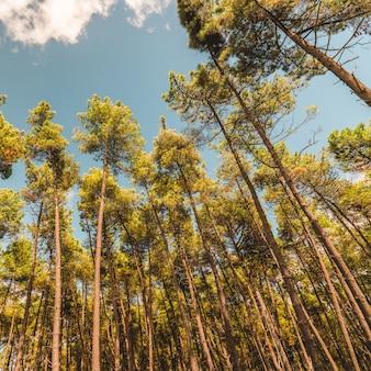Hoogbouw bomen aanraken van de heldere hemel