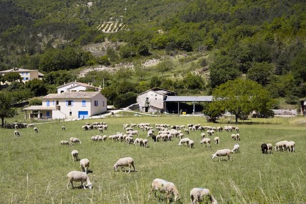 Hooggebergte boerderij.