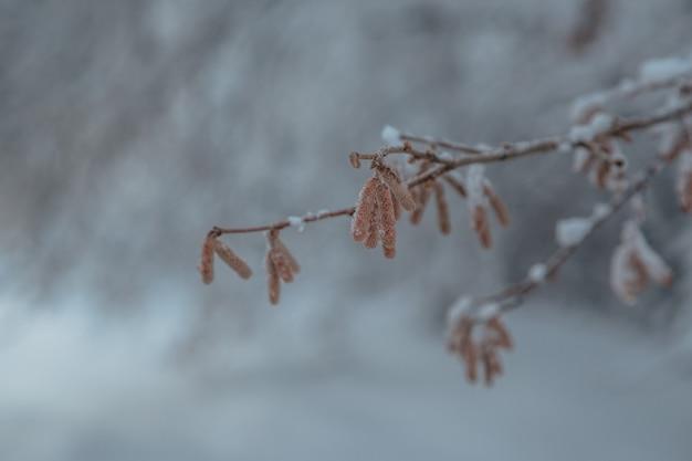 Hooggebergte onder de sneeuw in de winter