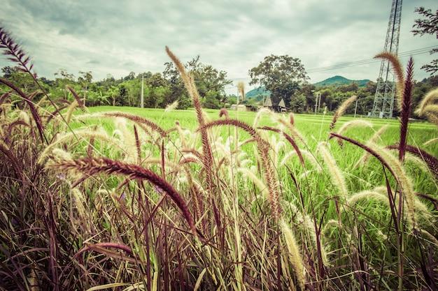 Hoogkokend met groen landschap en vintage effect