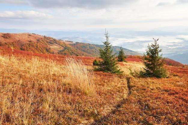 Hooglandvegetatie bescheiden zomer en ongewoon mooie kleuren bloeien in de herfst, vóór koud weer. bosbessen helderrood, naaldbosgroen, oranje bukbergen sinie- fantastische charme.