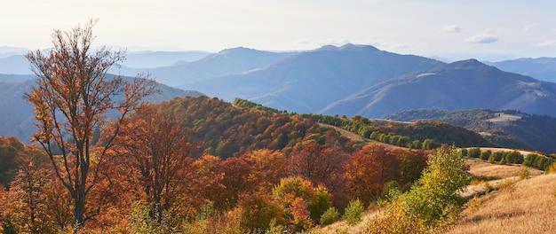 Hooglandvegetatie bescheiden zomer en ongewoon mooie kleuren bloeien in de herfst