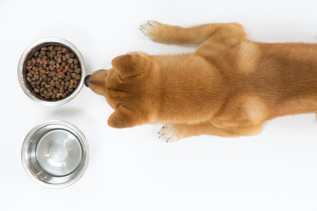 Hoogste mening van droog hondevoer in kom en rode shiba-inuhond die en eten kijken wachten