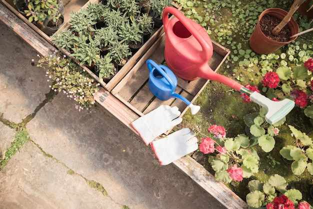 Hoogste mening van gieter en handhandschoenen dichtbij bloem ingemaakte installaties die in serre groeien