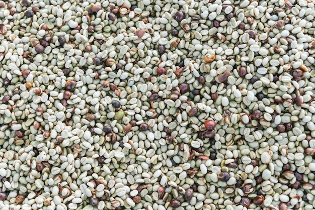 Hoogste mening van in de zon gedroogde arabica-koffiebonen in het akha-dorp van maejantai