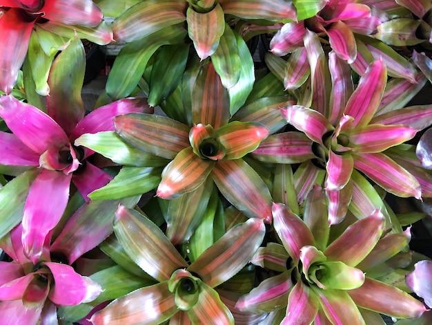 Hoogste mening van kleurrijke bloemachtergrond