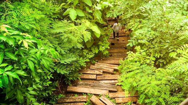 Hoogste mening van mangrovebos en boom met persoonswandeling op de manier van de houtblokgang op de voetganger.