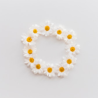 Hoogste mening van mooie madeliefjebloemen die op cirkelvorm over witte achtergrond schikken