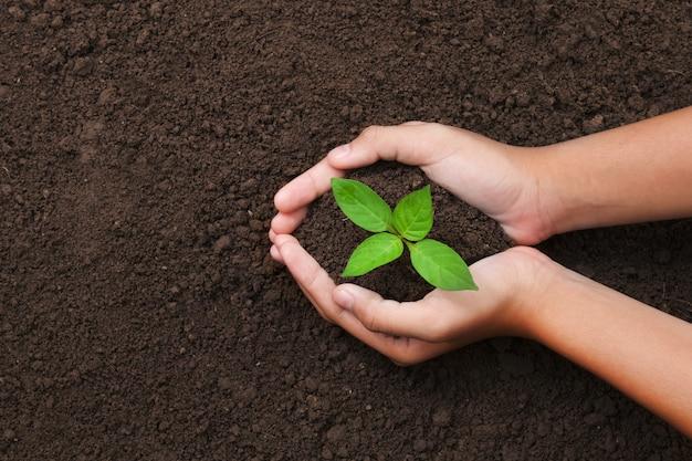 Hoogste meningshand die jonge boom voor het planten in tuin houden