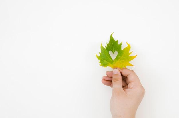 Hoogste meningshanden die de herfstbladeren houden