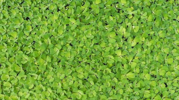 Hoogste meningswatersla, achtergrond en het textuur van het aard de de groene blad