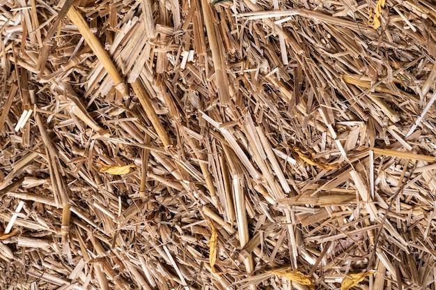 Hooi of stro textuur achtergrond. natuurlijke achtergrond