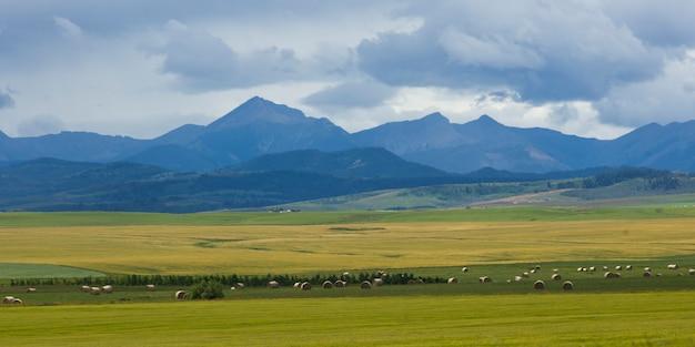 Hooibalen bij landbouwbedrijf met bergen op achtergrond, pincher-kreek, zuidelijk alberta, alberta, canada