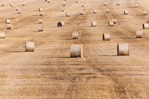 Hooibergen in een veld met stro