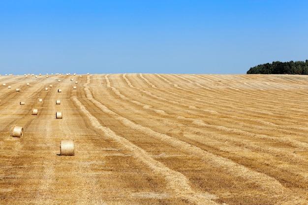 Hooibergen in een veld van stro een landbouwgebied waarop liggen stro hooibergen na de oogst blauwe hemel