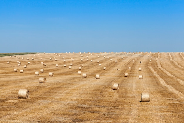 Hooibergen in een veld van stro hooibergen stro links na het oogsten van tarwe ondiepe scherptediepte
