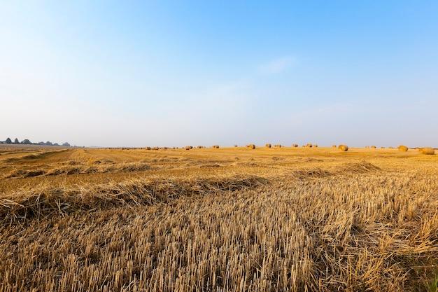 Hooibergen in een veld