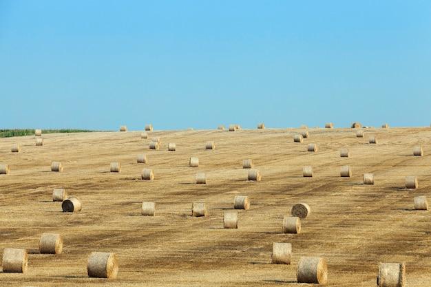 Hooibergen op een gebied van stro een landbouwgebied