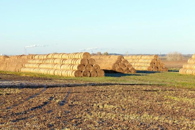 Hooibergen opgestapeld stro na de oogst op landbouwgebied. foto in het herfstseizoen