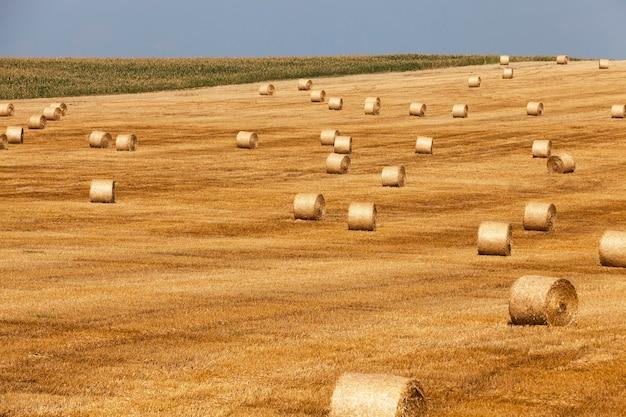 Hooibergen stro achtergelaten na het oogsten van tarwe, ondiepe scherptediepte