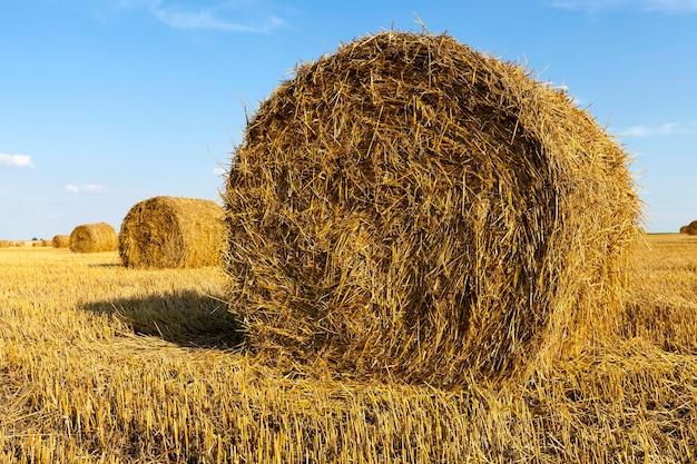 Hooibergen stro liggen in de landbouwsector na het oogsten van granen Premium Foto