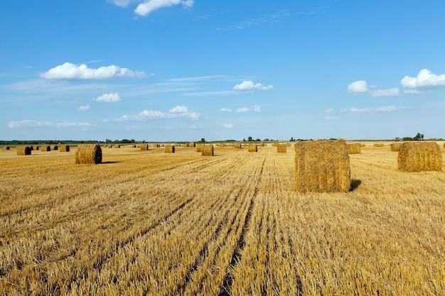 Hooibergen stro liggen in de landbouwsector na het oogsten van granen