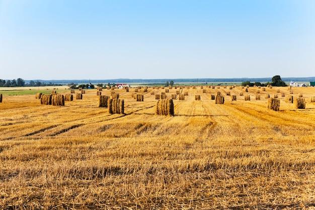 Hooibergen stro liggen op het gebied van landbouw