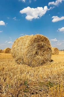 Hooibergen stro na de oogst