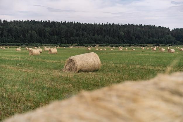 Hooimaaien in het veld op zomerdag karelia regio rusland