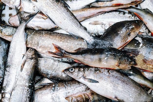 Hoop riviervis (baars, snoek, witvis)