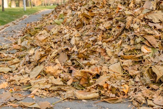 Hoop van gevallen droge bladeren geveegd op de weg in een park