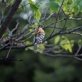 Hop die terwijl in de boom met natuurlijke achtergrond hangt