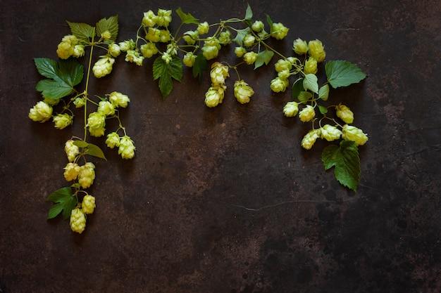 Hop plant. herfst . bovenaanzicht, close-up op donker.
