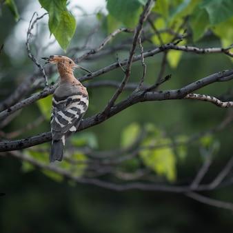 Hopend terwijl hij in de boom zit